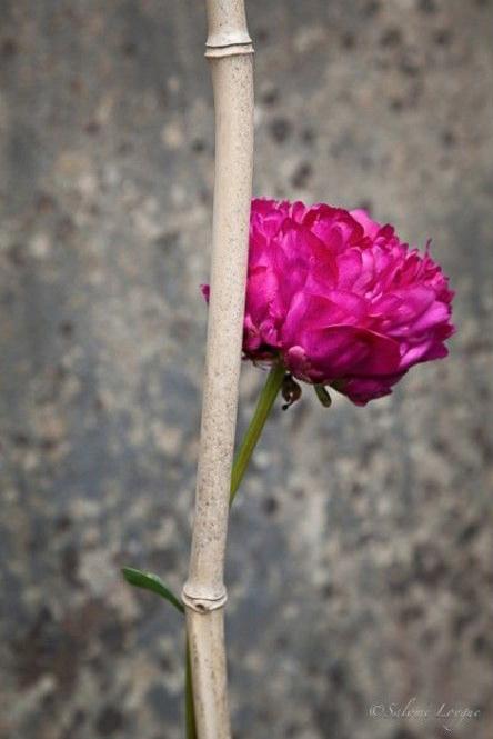 fleur-60456123012345x850